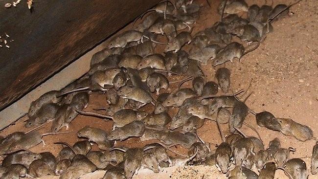 выше лениндград элеватор крысы кошки отделки